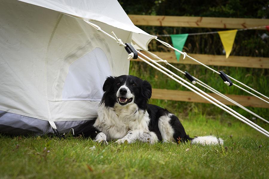 Campsite dog friendly