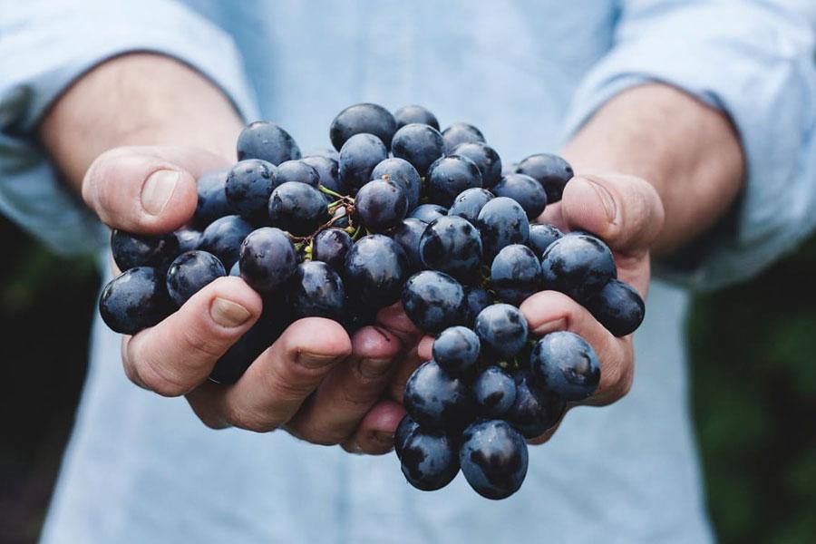 Homegrown fruit
